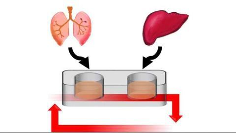 Novel Multi-Organ-on-a-Chip Could Change Approaches to Drug Development