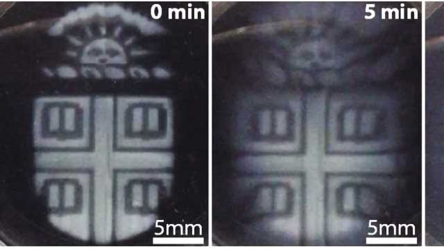 3-D-printed Biomaterials That Degrade On Demand Developed