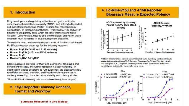 Fc Effector Bioassays for Rapid and Quantitative Measurement of ADCC and ADCP Mechanisms of Action