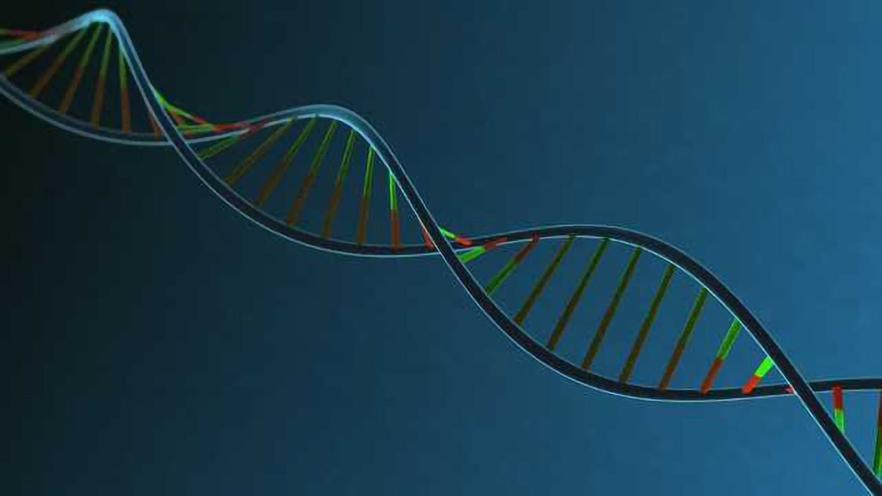 Gene Therapy Improves Heart Function by up to 25%