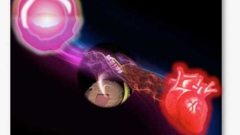 Regenerating Tissues with Gene-targeting Molecules