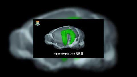New Function of the Hippocampus Revealed