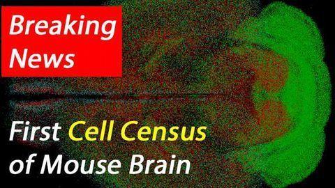 qBrain Platform Maps Neuronal Cell-Types Across Whole Mouse Brain
