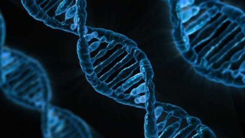 Accurately Transcribing DNA Overrides DNA Repair