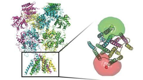 Molecule Movements Through Nerve Cells Could Lead to Multi-functional Drugs