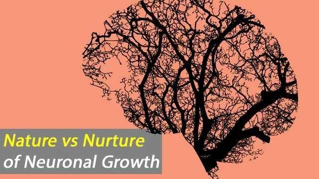 Regional Brain Cell Environment Shapes Neuronal Phenotype