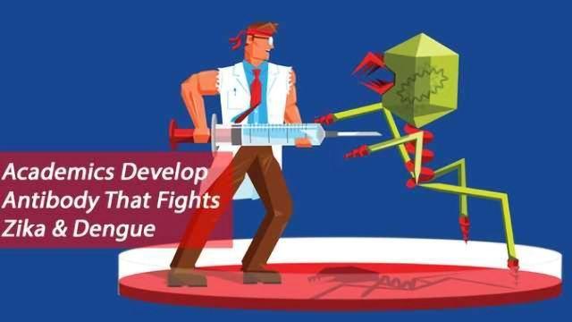 Academics Hone in on Human Antibodies to Fight Zika and Dengue Viruses