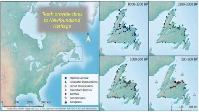 Forensic Evidence Shows Newfoundland was Populated Multiple Times by Distinct Groups