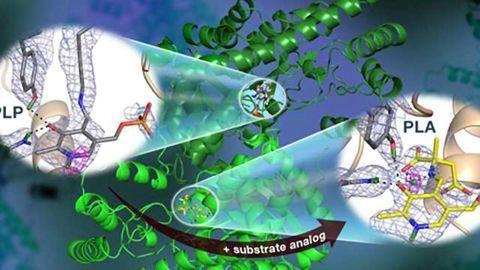 Neutrons Observe Vitamin B6-dependent Enzyme Activity Useful for Drug Development