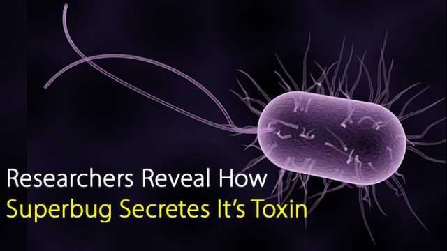 Researchers Reveal How Superbug Secretes It's Toxin