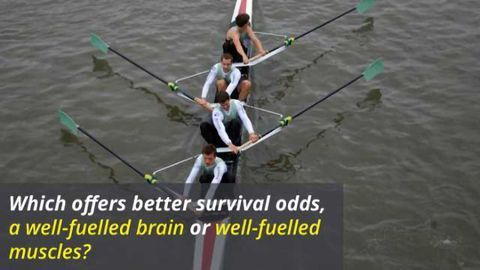 'Selfish Brain' vs Muscle Power - Who Wins Out?