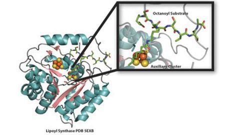 Renewable Resource: To Produce Vital Lipoic Acid, Sulfur is Used, Then Replenished