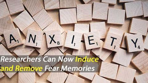 New Insight Challenges Dogma of Fear Learning