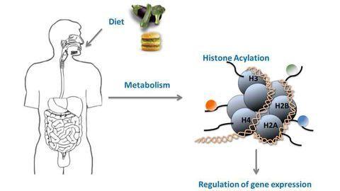 Novel Histone Modifications Couple Metabolism to Gene Activity