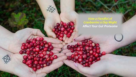 New Study Explores Dried Cranberries' Effect on Gut Health