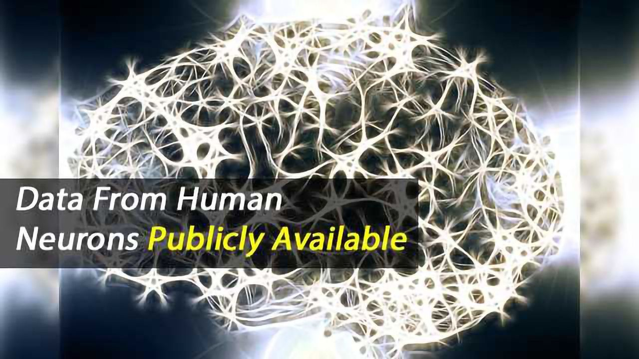 The Allen Institute Shares First Data from Live Human Brain Cells
