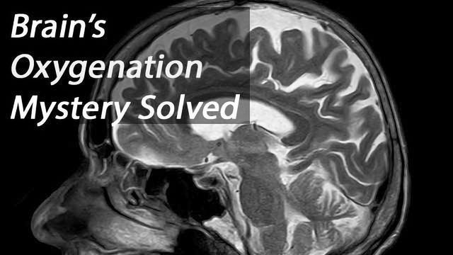 Researchers Solve Mystery of Oxygenation Connections in the Brain