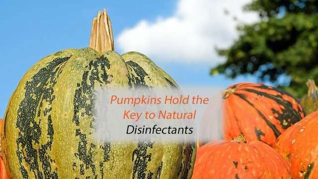 Pumpkins Hold the Key to Natural Disinfectants