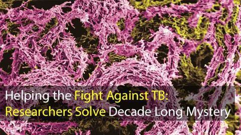 Helping the Fight Against TB: Researchers Solve Decade Long Mystery