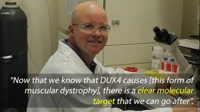 New Muscular Dystrophy Drug Targets Found