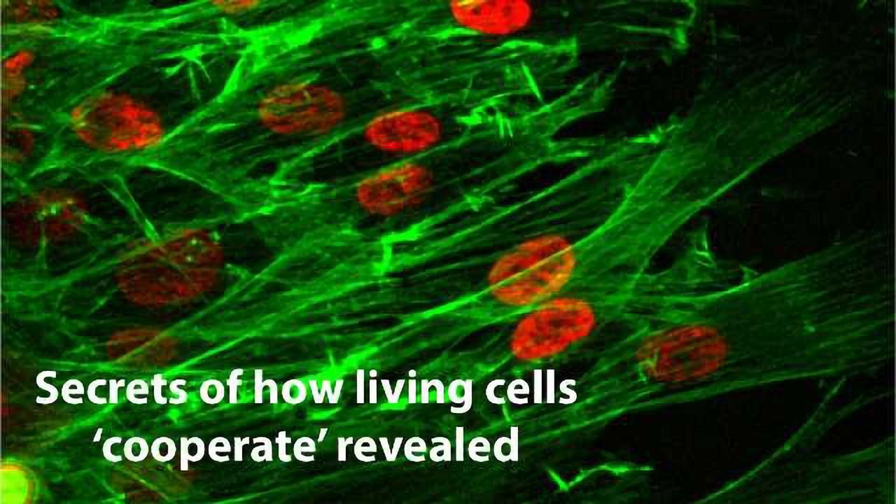 Findings Probe Cell Cooperation
