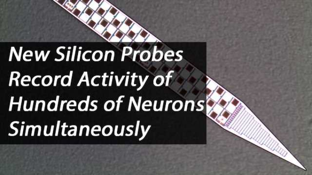 Neuropixels Probes Can Record from Hundreds of Neurons in Different Brain Areas at Once