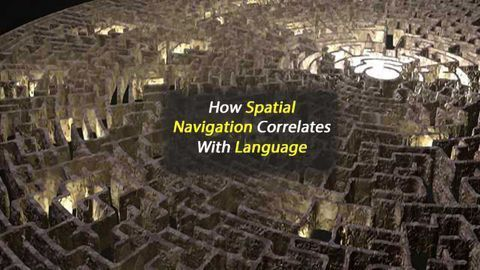 How Spatial Navigation Correlates with Language