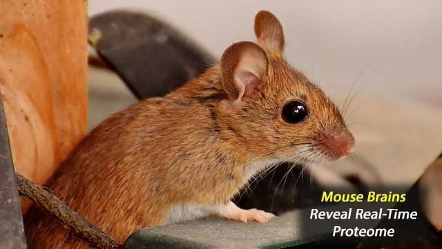 Detecting New Proteins in Active Mice