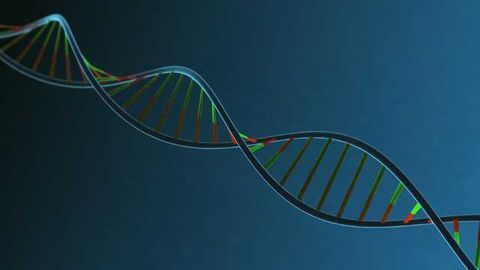 Discovering a Protein's Role in Gene Expression