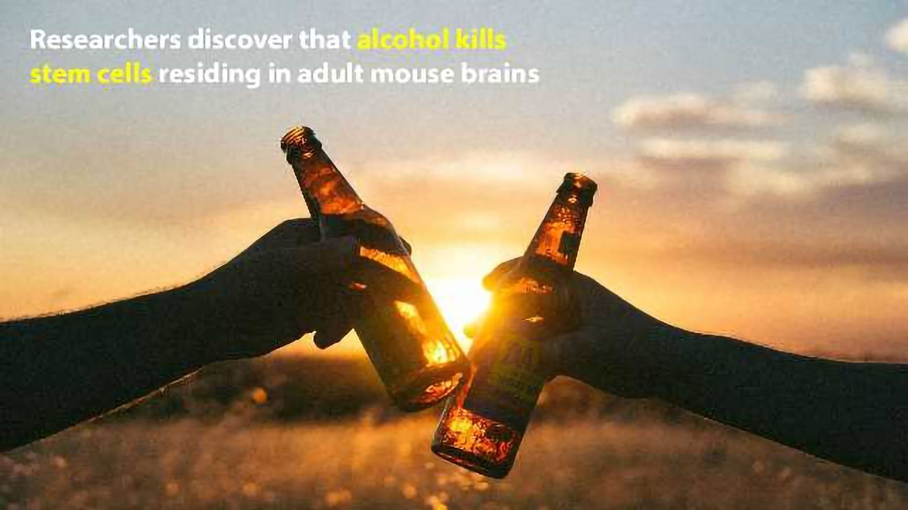Frequent Alcohol Drinking Kills New Brain Cells in Adults