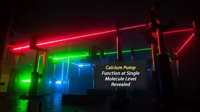 Step Towards Understanding Calcium Pump Functionality