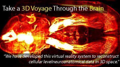 Take a 3D Voyage Through the Brain