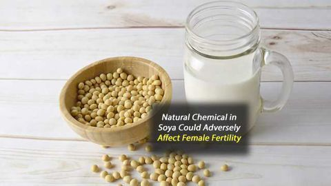 Study Finds Dietary Levels of Genistein May Adversely Affect Female Fertility