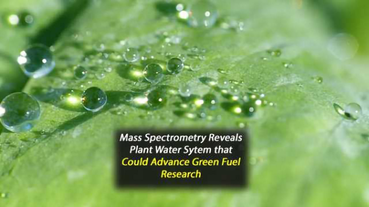 High-Resolution Mass Spectrometry Reveals Pathways in Photosystem II Water System