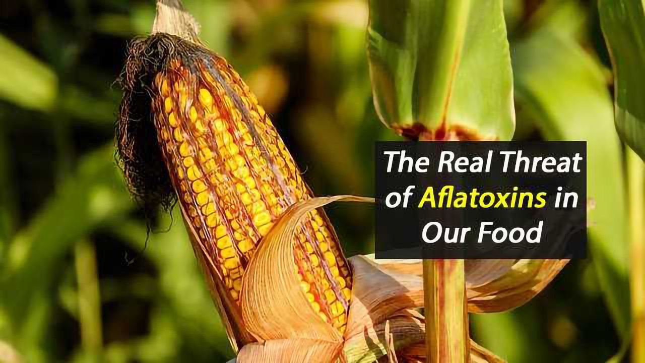 The Importance of Aflatoxin Discrimination in Food Testing