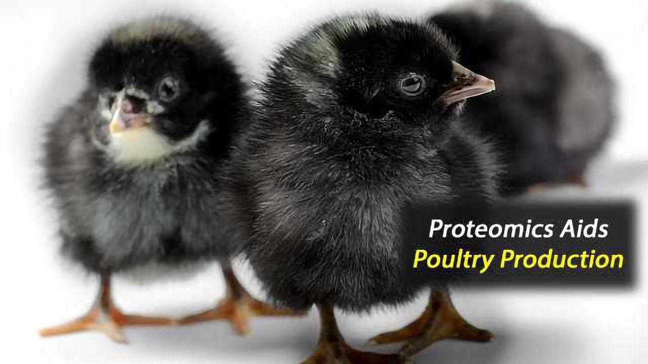 Improving Poultry Production Through Precision Fertility Management