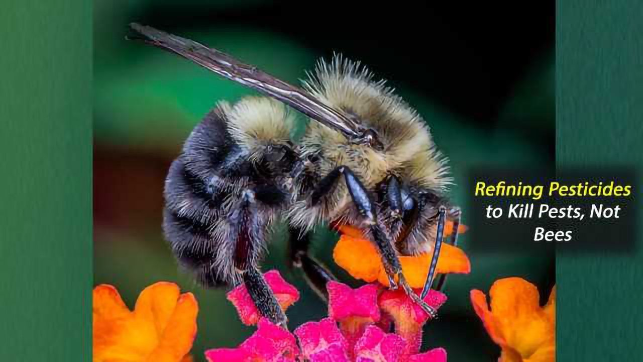 Refining Pesticides to Kill Pests, Not Bees