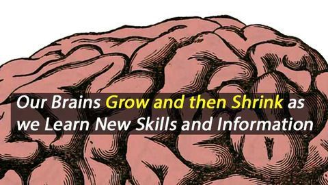 The Brain's Gray Matter Increases and then Decreases in Volume During Learning