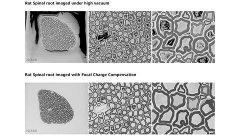 New Focal Charge Compensation Mode for ZEISS Field Emission Scanning Electron Microscopes Improves Image Quality