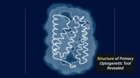 Structure of Primary Optogenetic Tool Revealed
