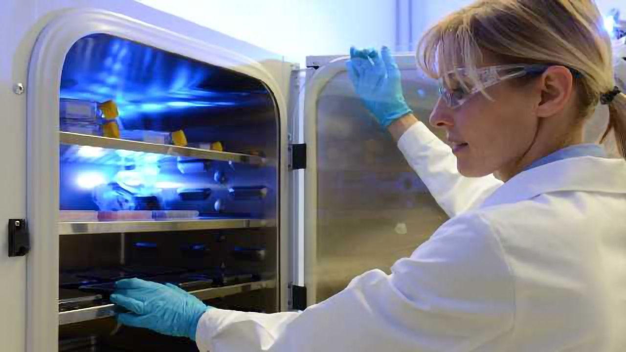 Unlocking The Full Potential of Organoids