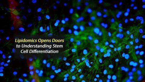 Lipidomics Opens Doors to Understanding Stem Cell Differentiation