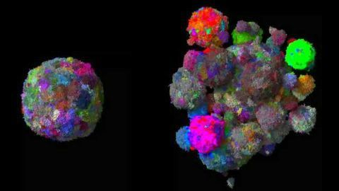 Breakthrough 3D Engineered Cancer Models Could Reduce Animal Testing