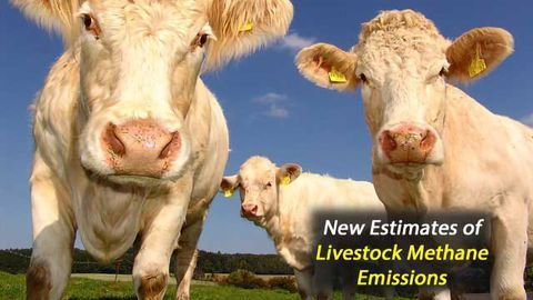 Getting a Better Handle on Methane Emissions From Livestock
