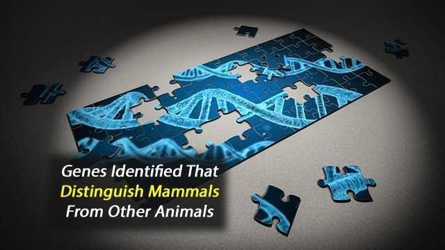 Genes Unique to Mammals Identified