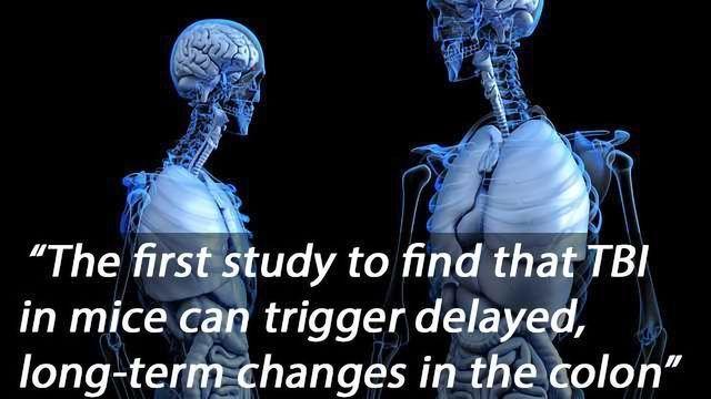 Traumatic Brain Injury Causes Intestinal Damage