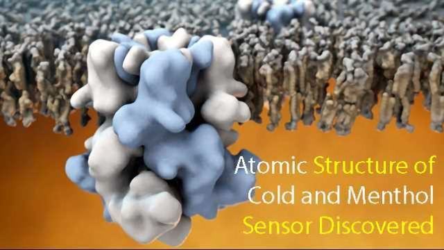 Atomic Structure of 'Cold' Receptor Uncovered Aiding Therapeutic Targeting