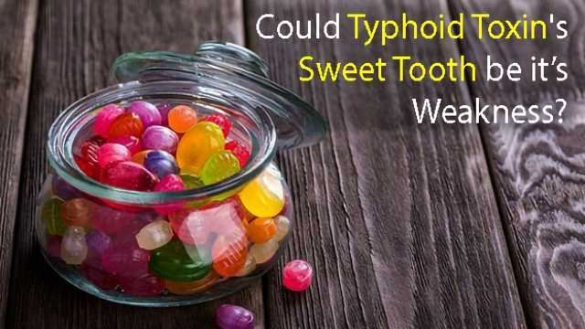 The Discovery of Typhoid Toxin's Sweet Tooth Could Lead to New Treatments