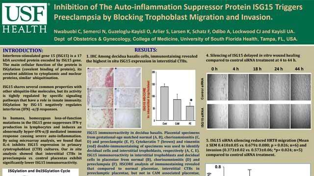 Inhibition of The Auto-inflammation Suppressor Protein ISG15 Triggers Preeclampsia by Blocking Trophoblast Migration and Invasion