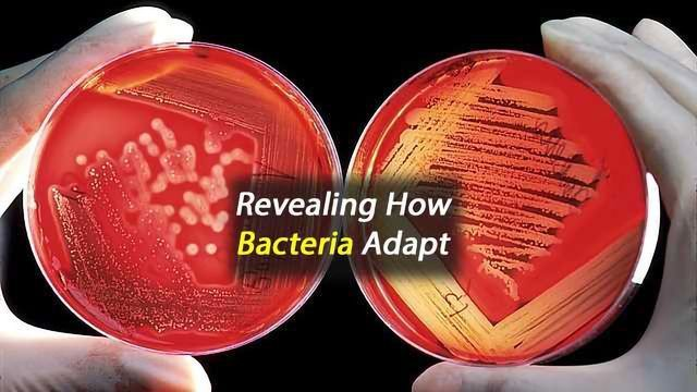 Bacterial Control Mechanism for Adjusting to Changing Conditions